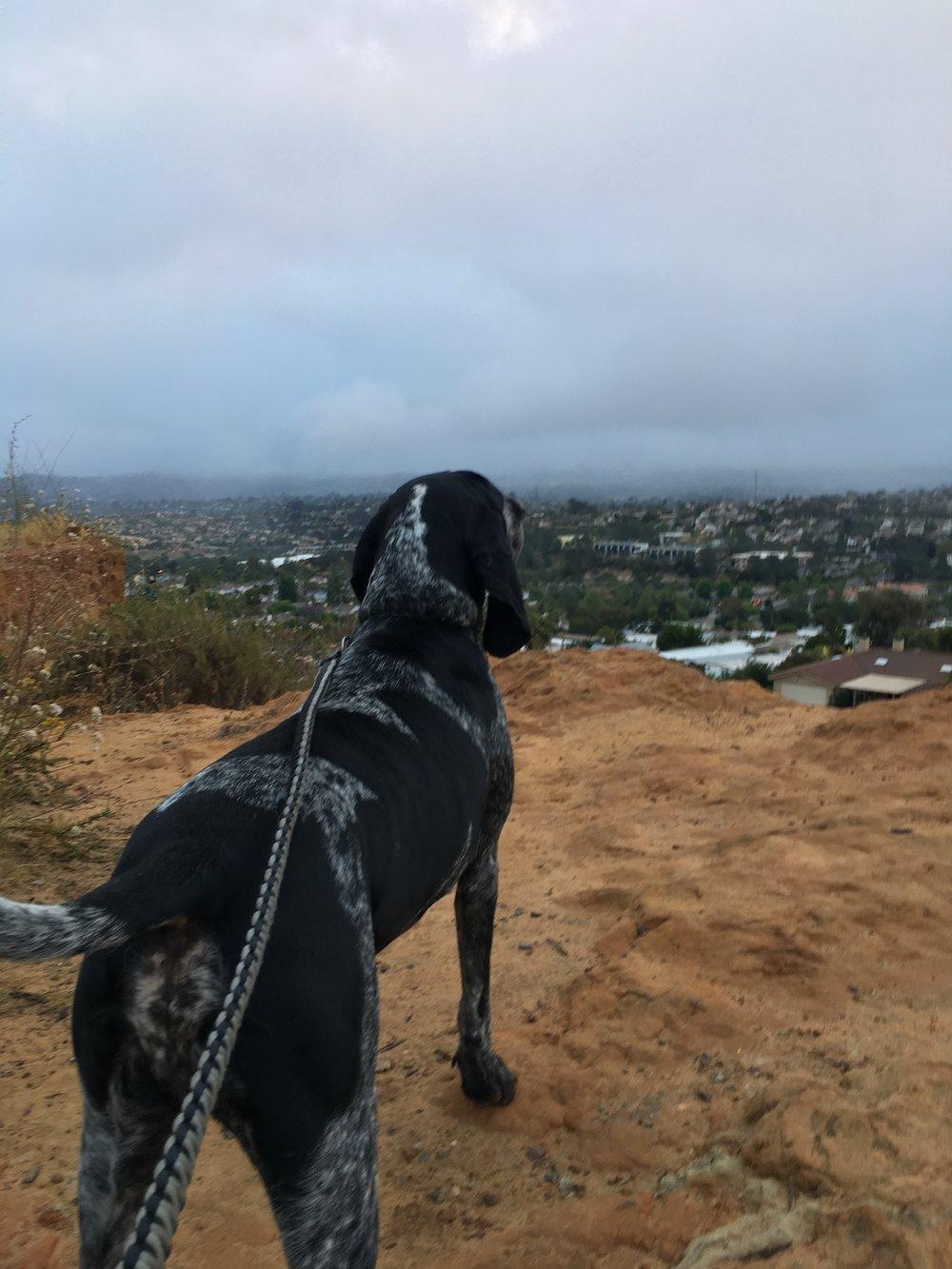 Billy overlooking city.JPG