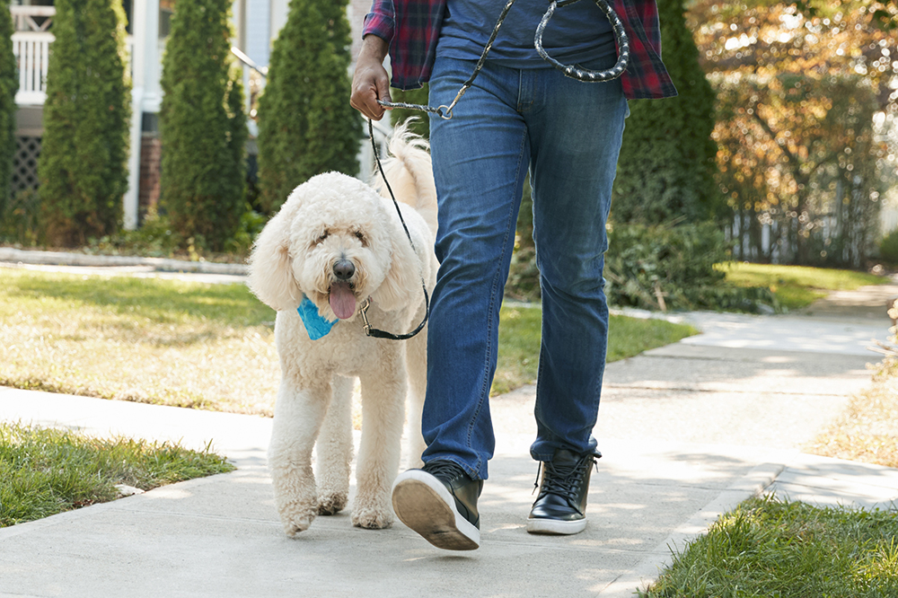 Dog walking >> -