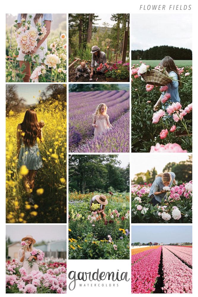 flower-field.jpg