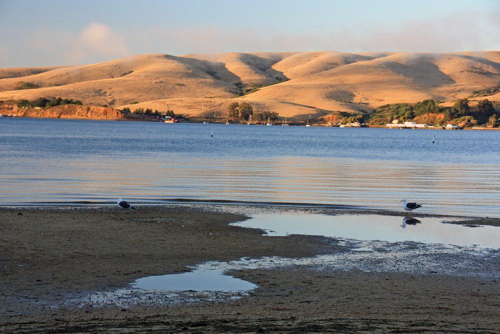 Tomales Bay -