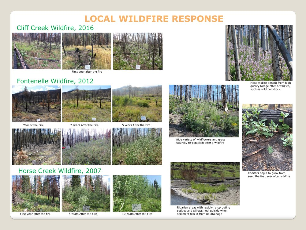 Click on the picture to dowload Local Wildfire Response