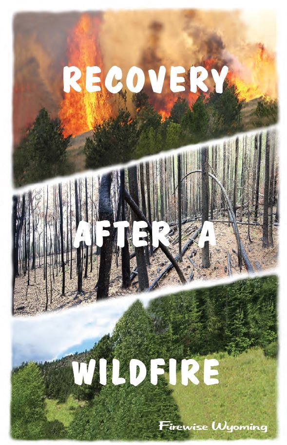 Recovery After A Wildfire.JPG