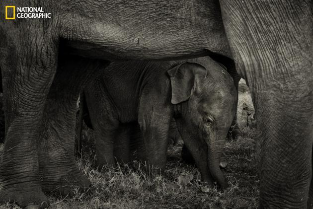 Best Shelter Ever by Arati Rao
