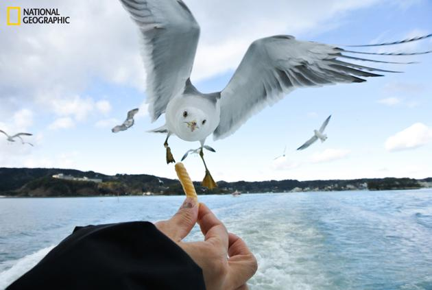 Seagull by Junichi Saito