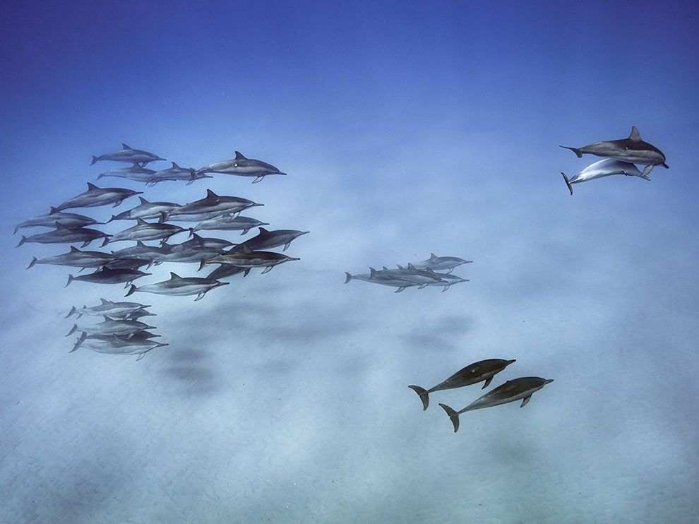 spinner-dolphins-hawaii_89672_990x742