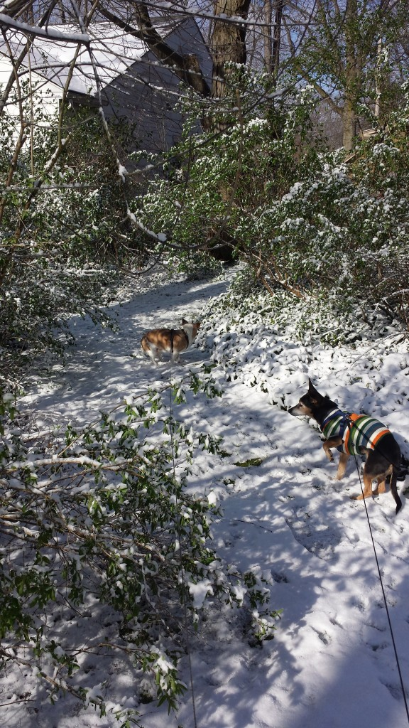 Mez and Wen in April snow