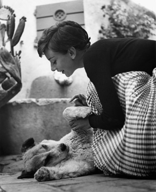 Audrey Hepburn and a pup