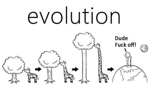 evolution-humor