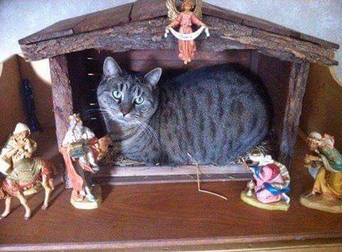 kitty-in-the-manger