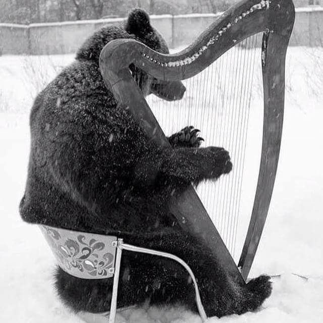 bear playing the harp