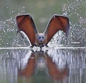 bat on a hot tin roof