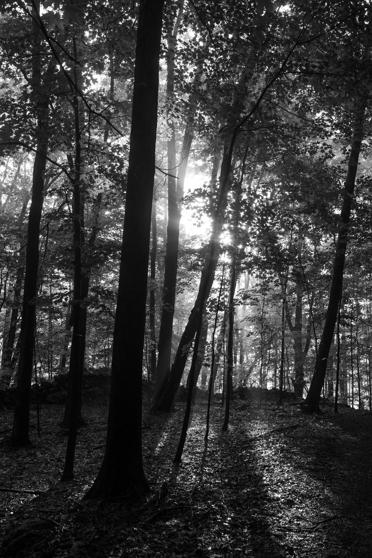 light_through_forest.jpg