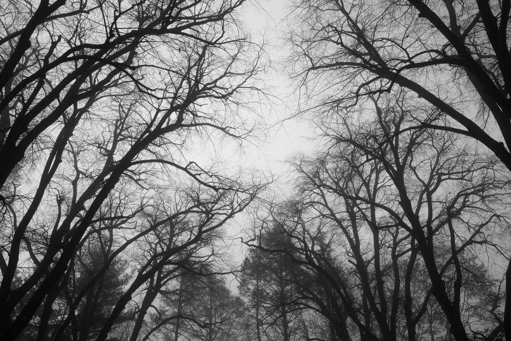looming_trees.jpg