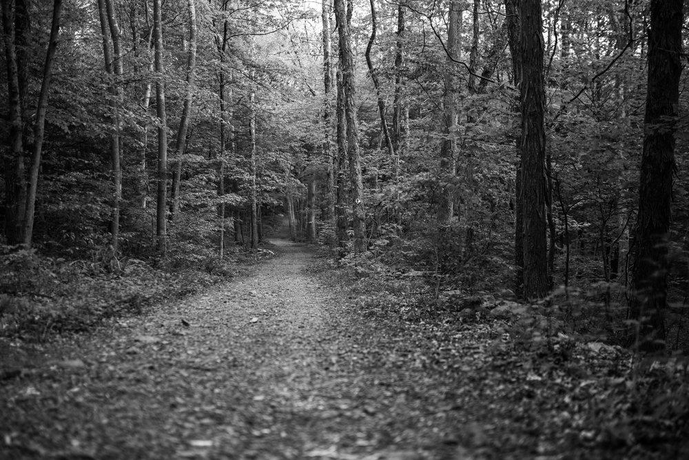 path_forest_weston.jpg