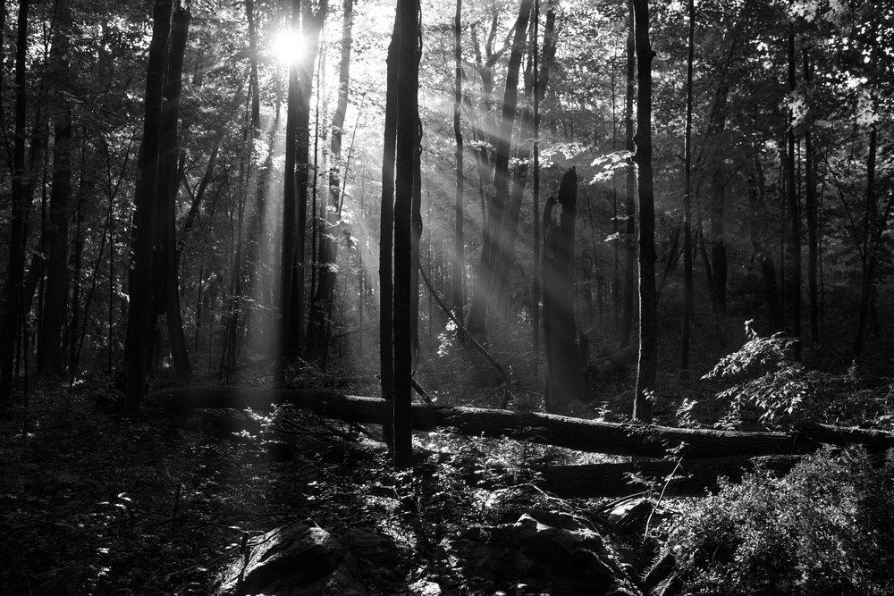 sunrays_through_trees.jpg