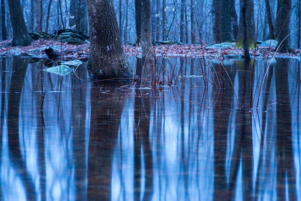reflections_vernal_pool.jpg