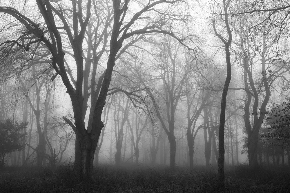trees_in_fog_web.jpg