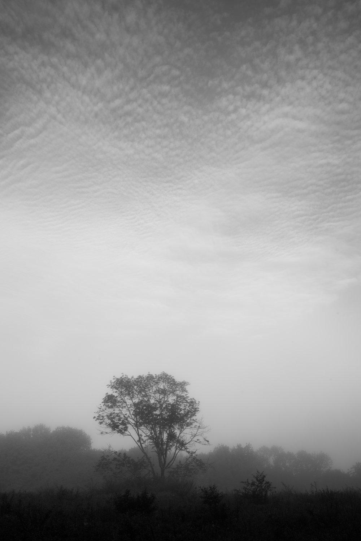 lone_tree_speckled_sky.jpg