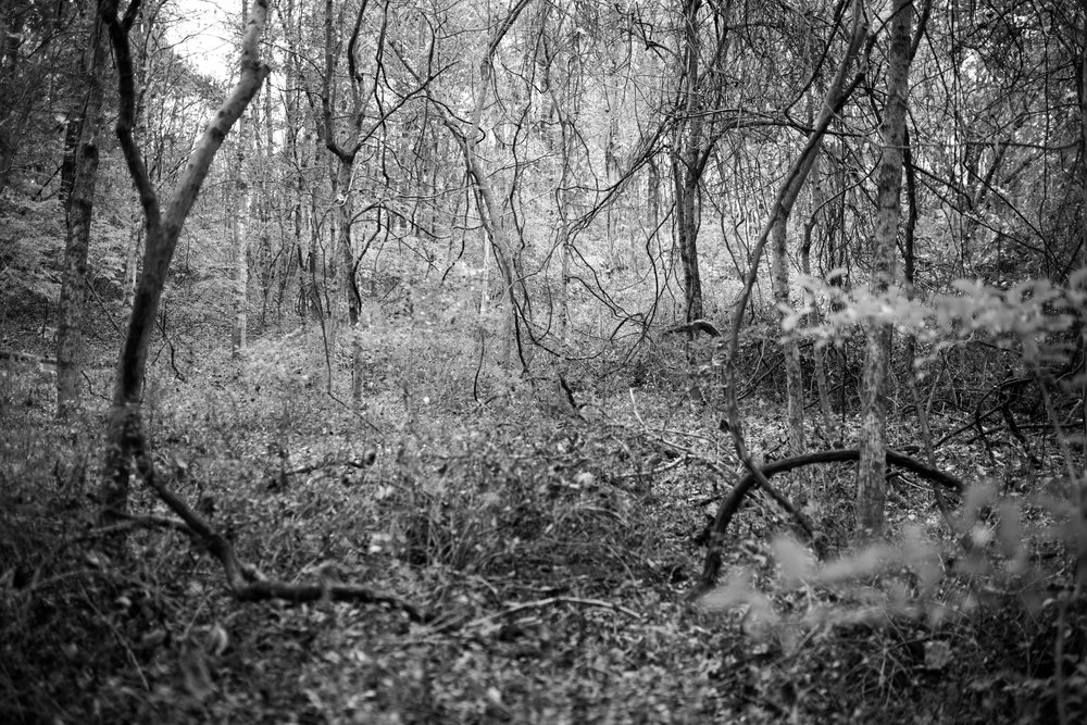 forest_vines-3.jpg