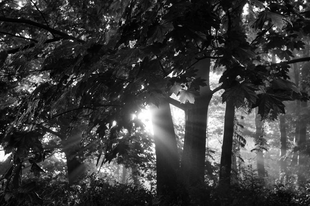 sunshine_through_canopy.jpg