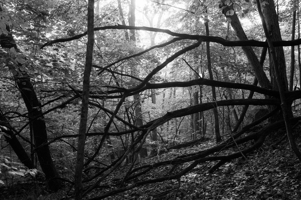 crossing_branches.jpg