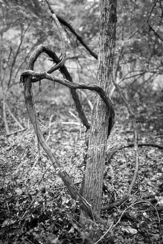 forest_vines-2.jpg