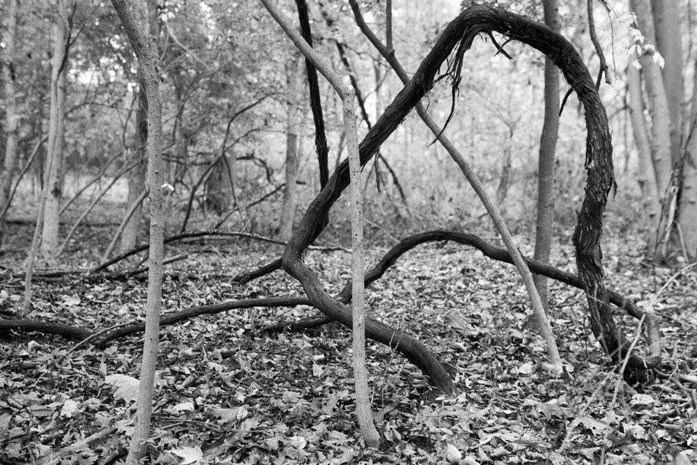 forest_vines.jpg