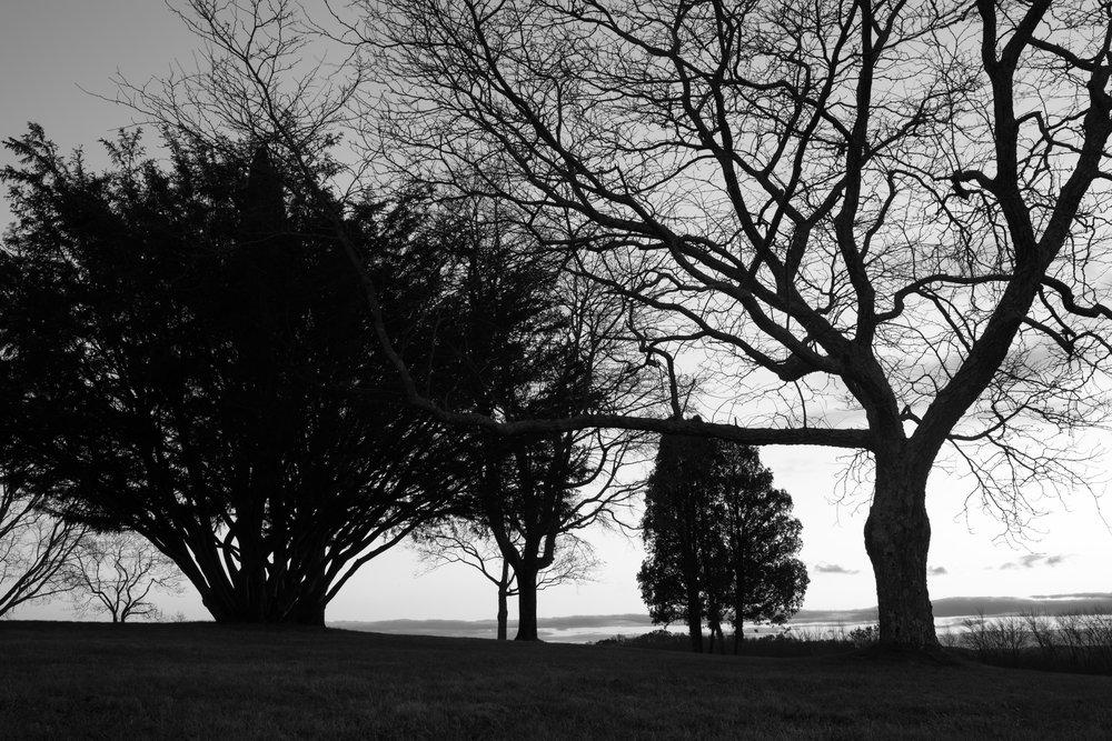 trees_sunset_holcomb.jpg