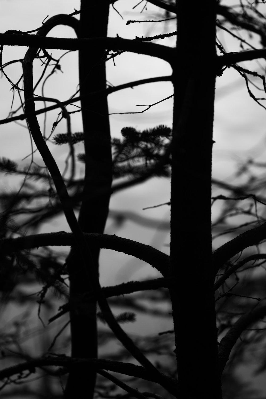 branches_twilight.jpg