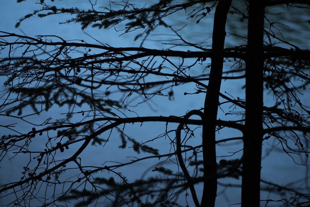 branches_blue_background.jpg