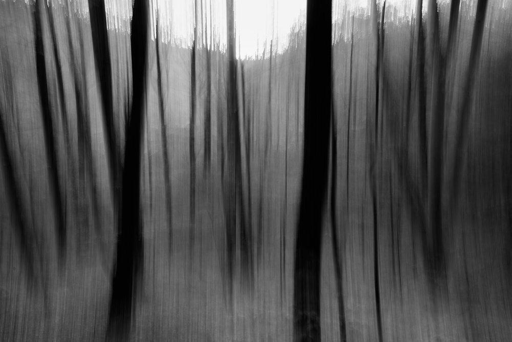 dancing_trees.jpg