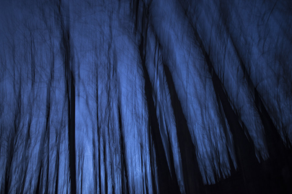 deep_blue_trees_at_night.jpg