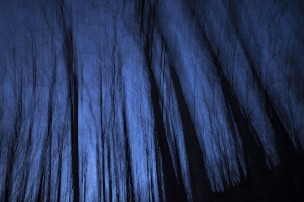 deep_blue_trees_at_night.jpg