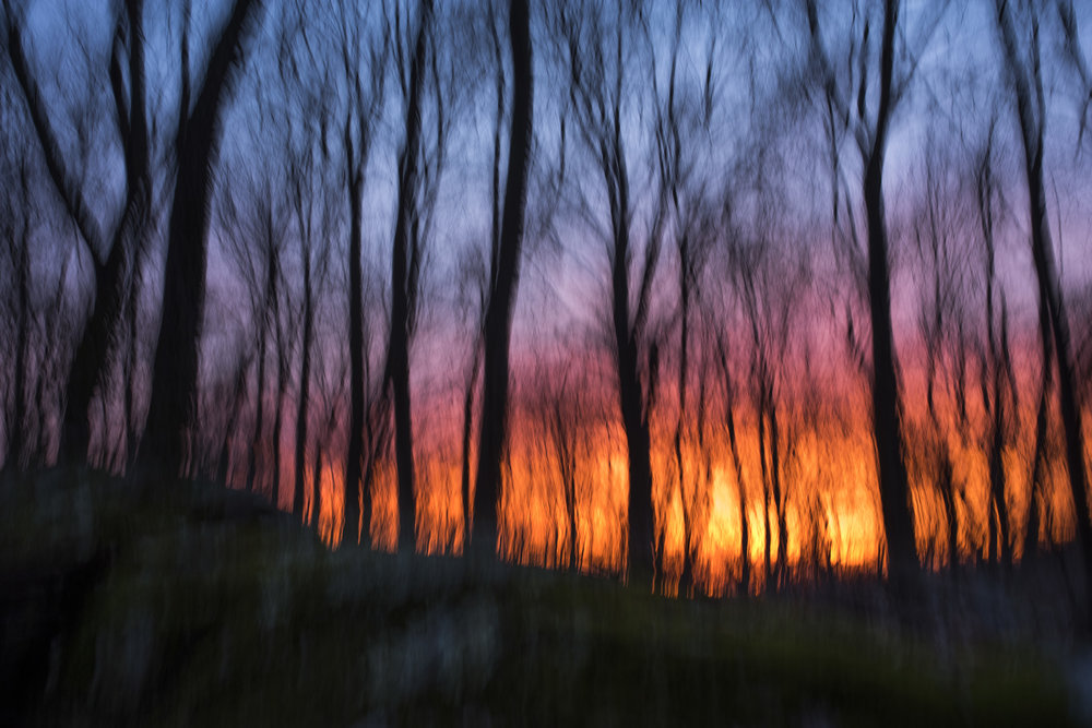 colors_forest_sunset.jpg