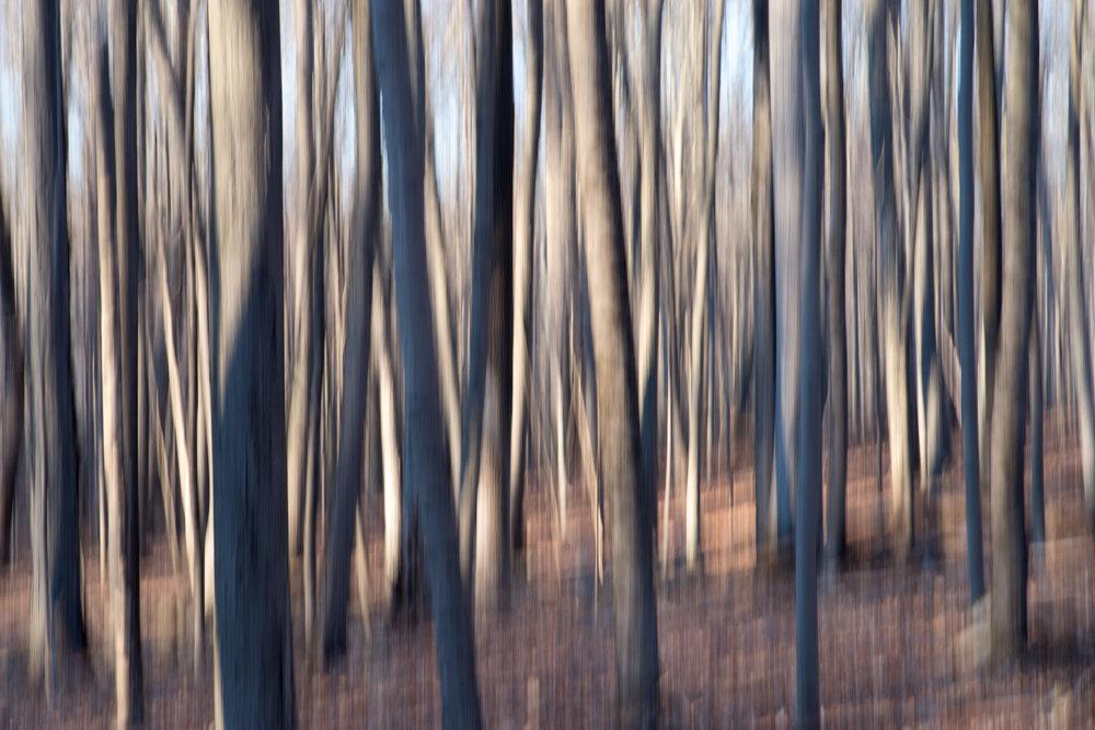 ligh_shadow_dancing_trunks.jpg