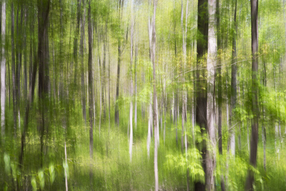 mostly_green_forest.jpg