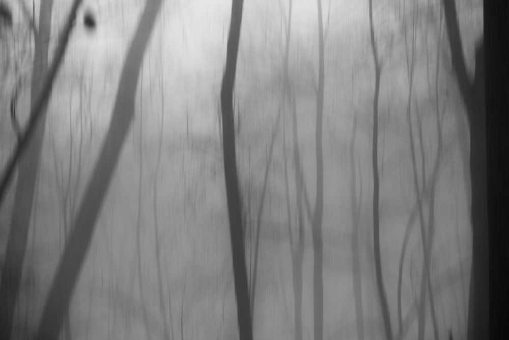 washed_out_forest_fog.jpg