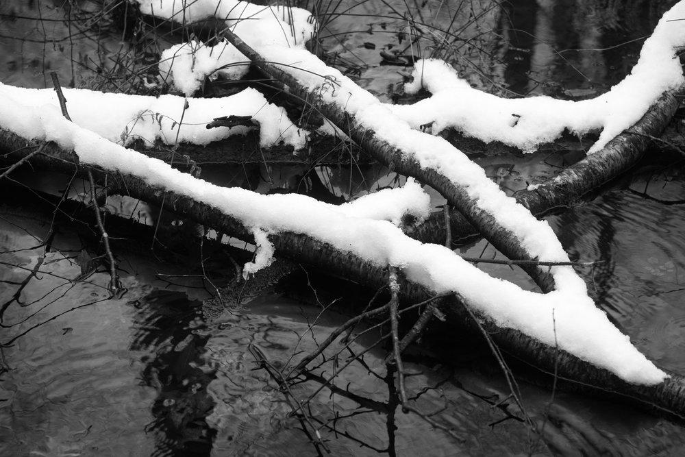 snow_log_stream.jpg