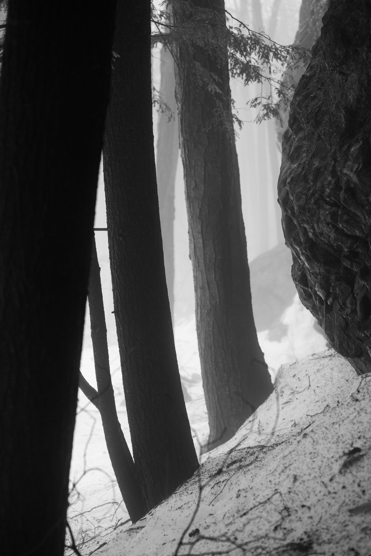 trunks_and_boulder.jpg