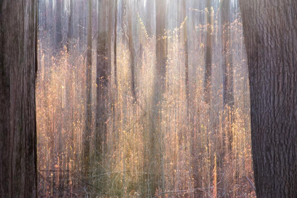 dreamy_tree_trunks.jpg