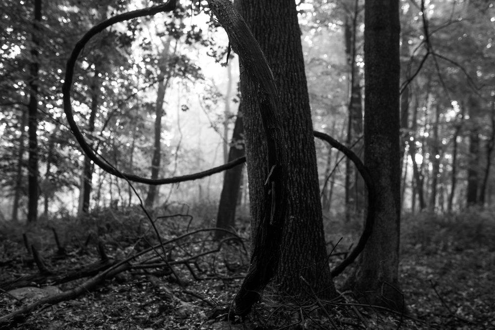 infinity_tree.jpg