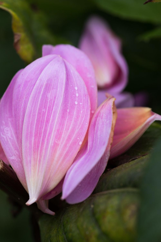 fallen_petals.jpg