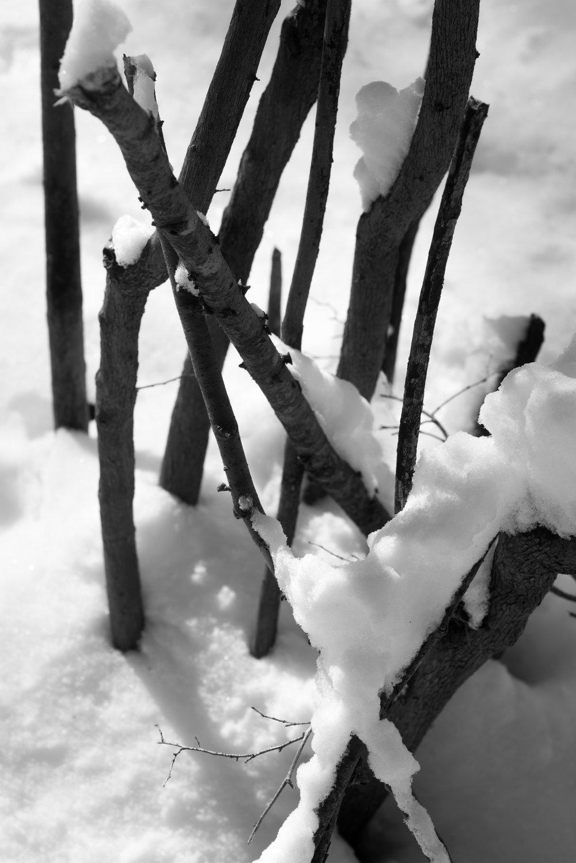 sticks in snow.jpg