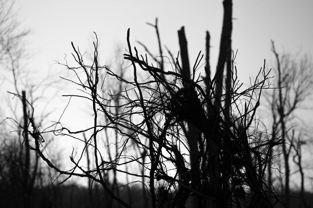 root_ball_tentacles.jpg