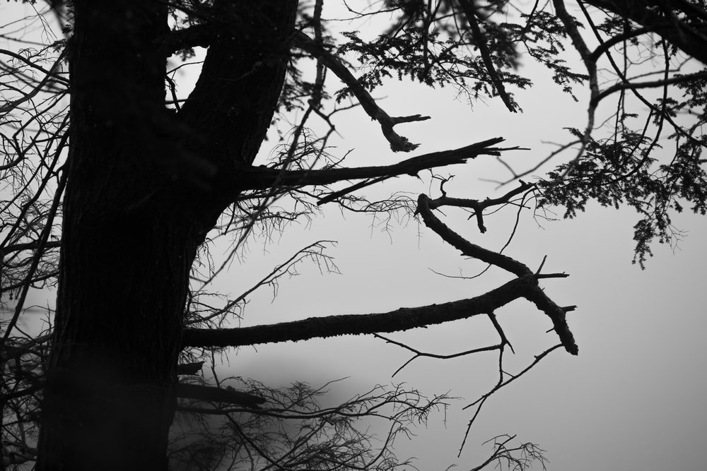 moody tree forms.jpg
