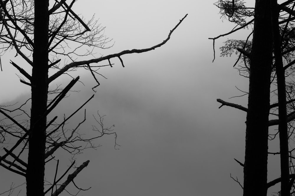 moody tree forms-3.jpg