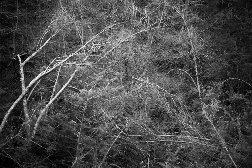 storm damaged trees.jpg