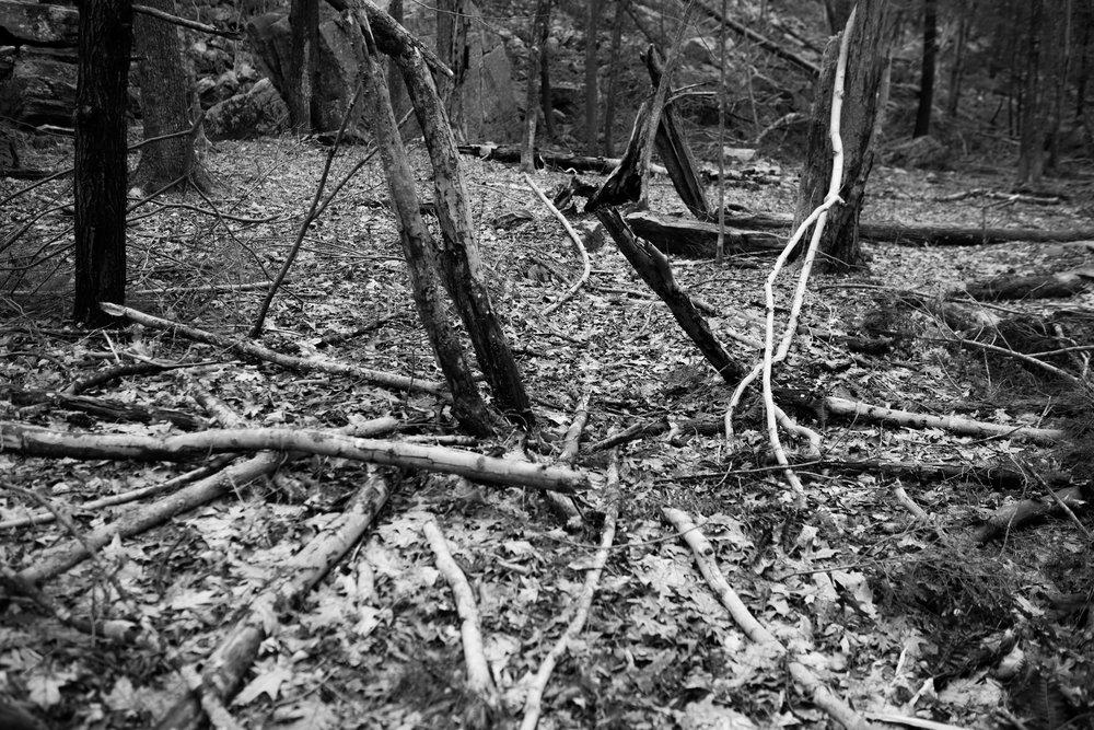 scattered sticks.jpg