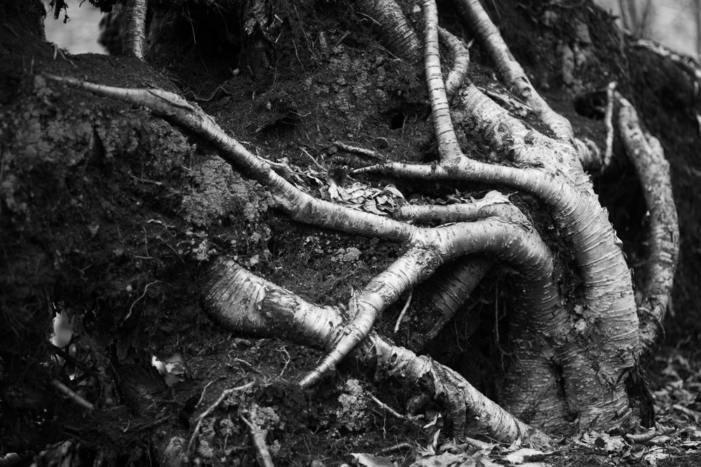 roots reaching from ground.jpg