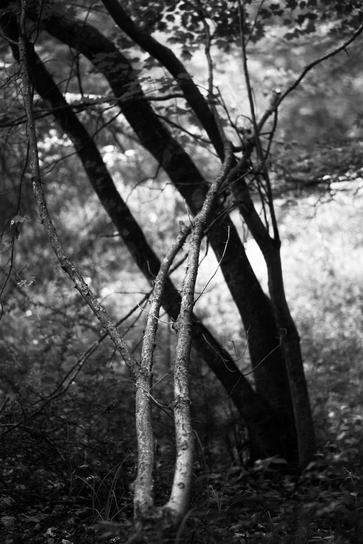 light and dark trees.jpg